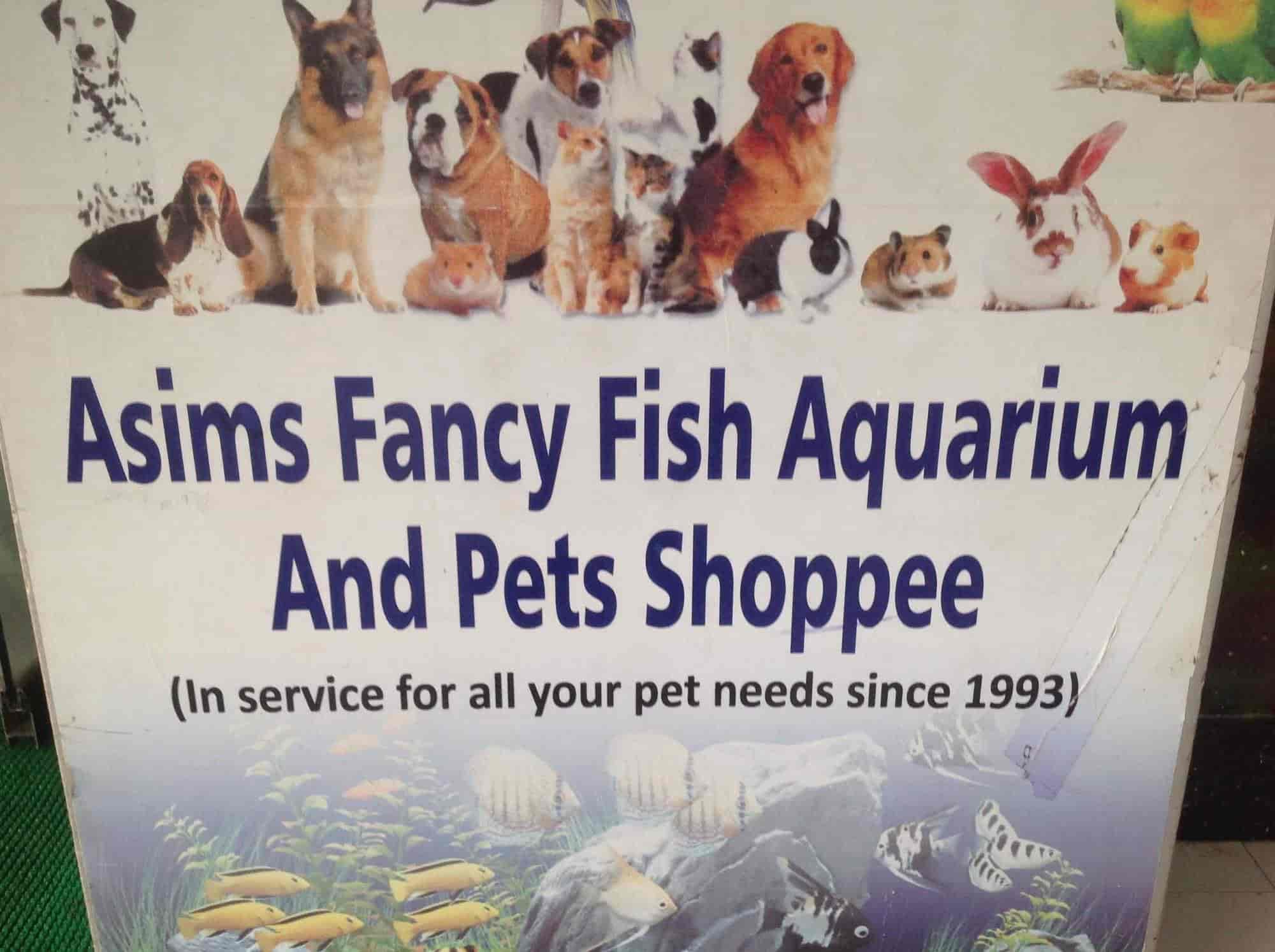 Asims Fancy Fish Aquarium N Pet Shoppee, Dharampeth