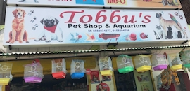 Top Pet Shops For Birds in Dharampeth - Best Bird Shops