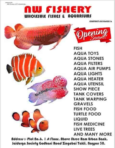 Top 7 Aquarium Australian Rainbow Fish Wholesalers In Nagpur Justdial