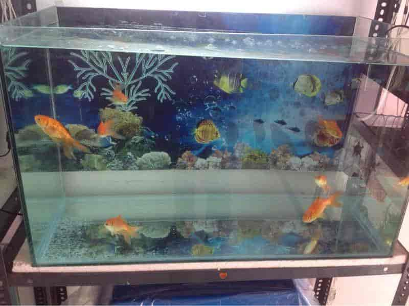 Fish Aquarium Home Photos Model Town Panipat Pictures Images Gallery Justdial