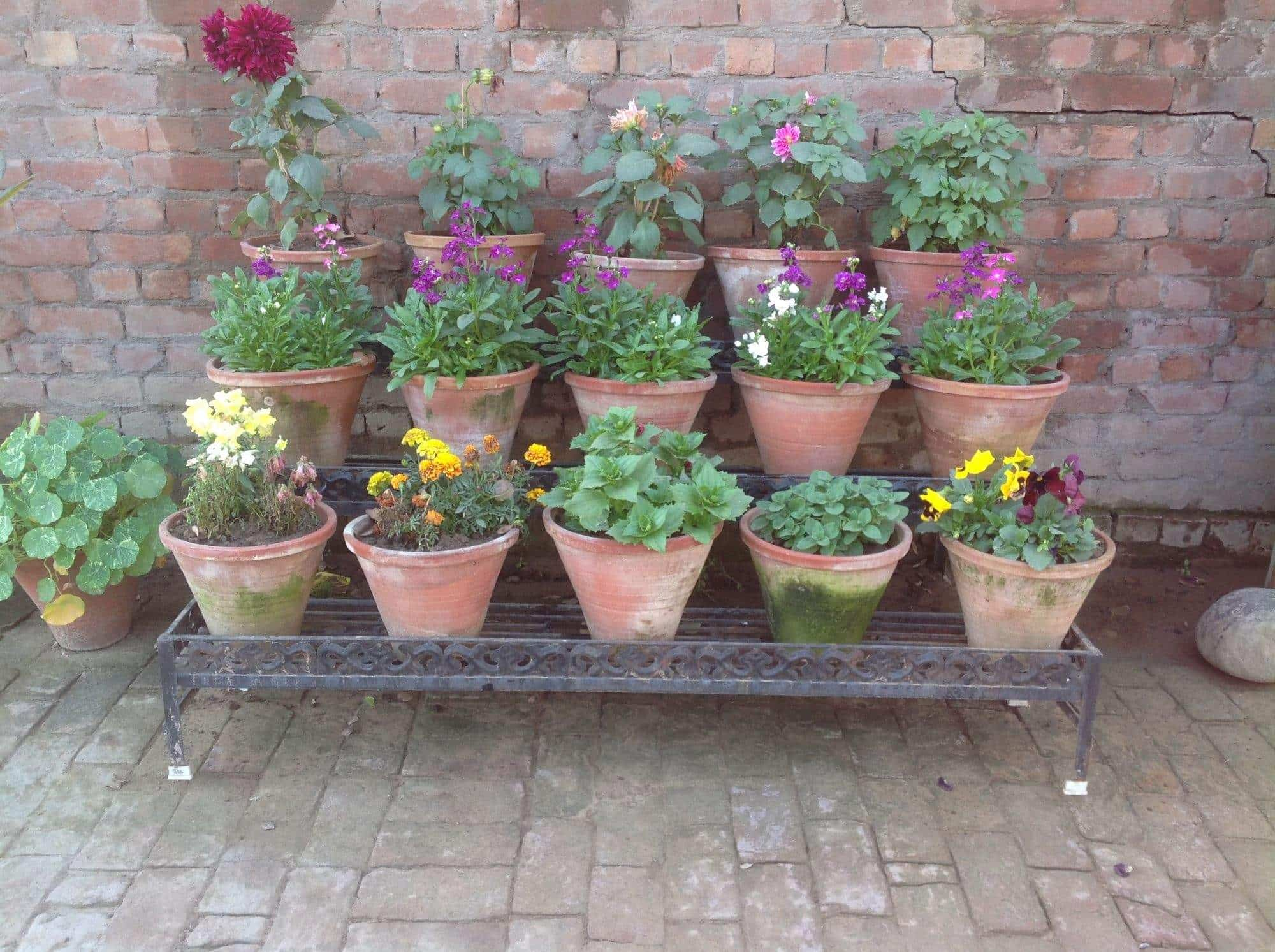 Green World Nursery Majithia Enclave Plant Nurseries In Patiala