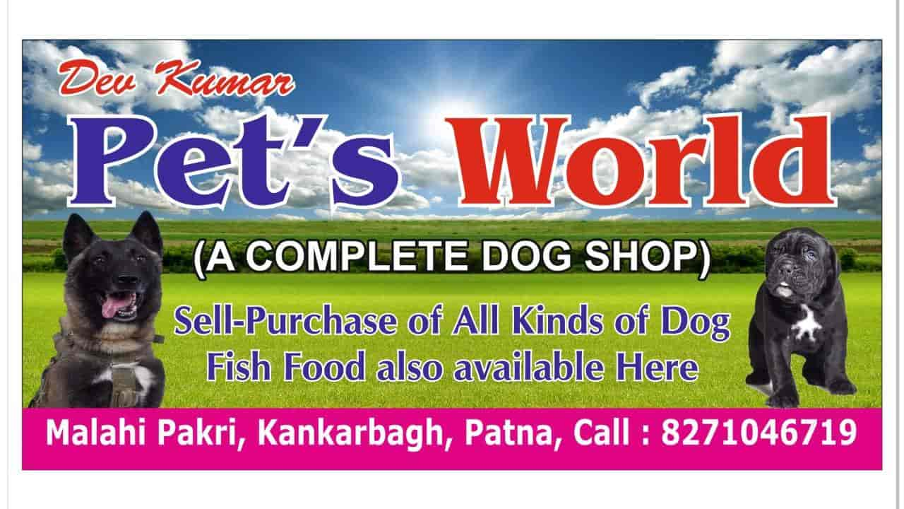 Top 50 Pet S For Dog In Patna
