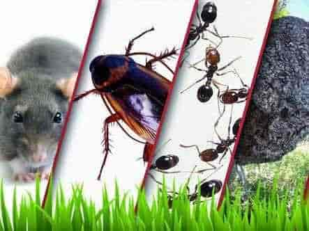 Eco Care Pest Control Sinhagad Road Vadgaon Budruk Residential Services In Pune Justdial