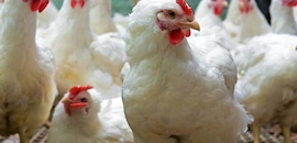 Top 50 Poultry Feed Manufacturers in Hyderabad - Justdial