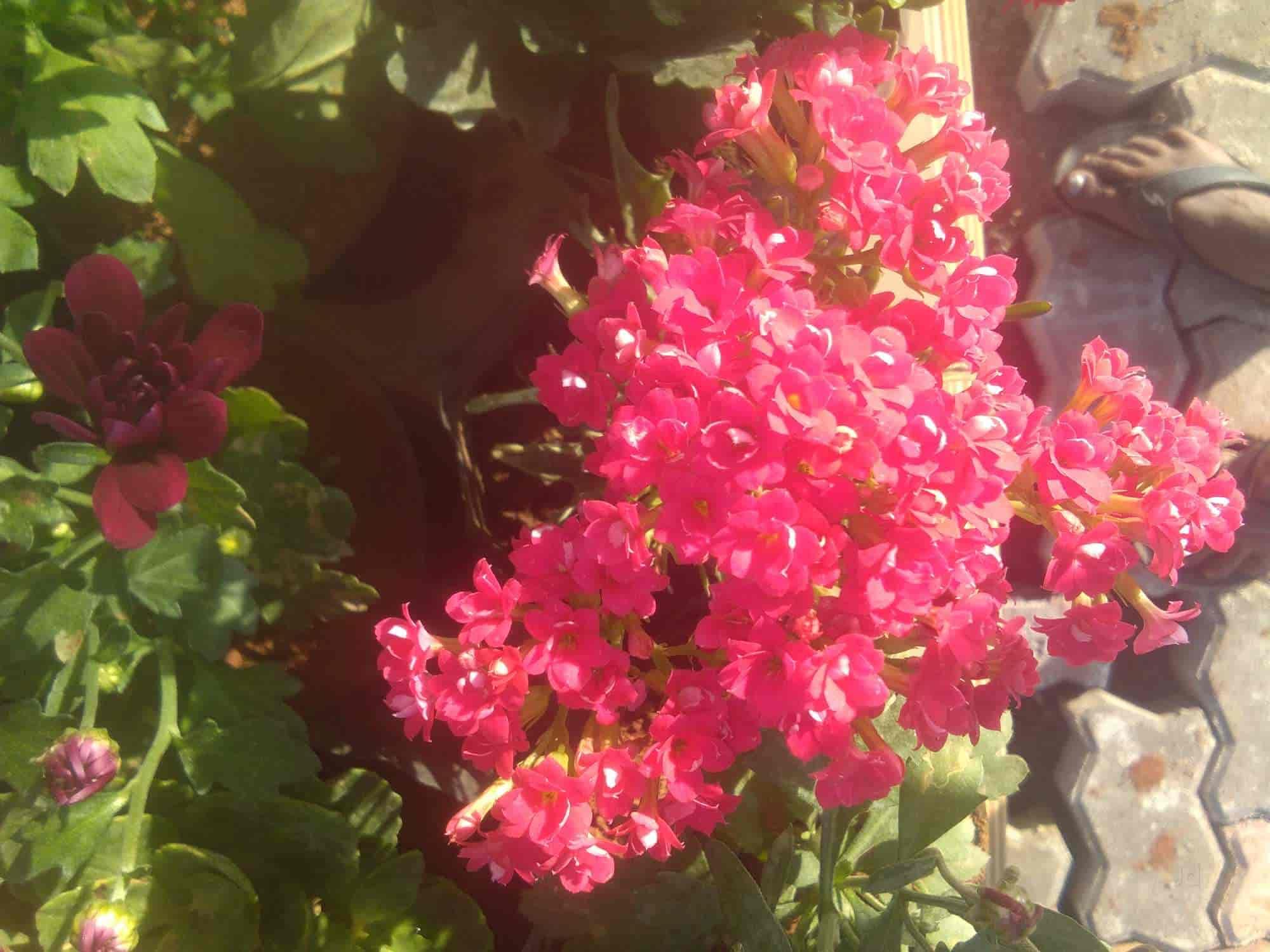 Top 10 Plant Nurseries In Panem Best Nursery Plant Suppliers Kurnool Justdial