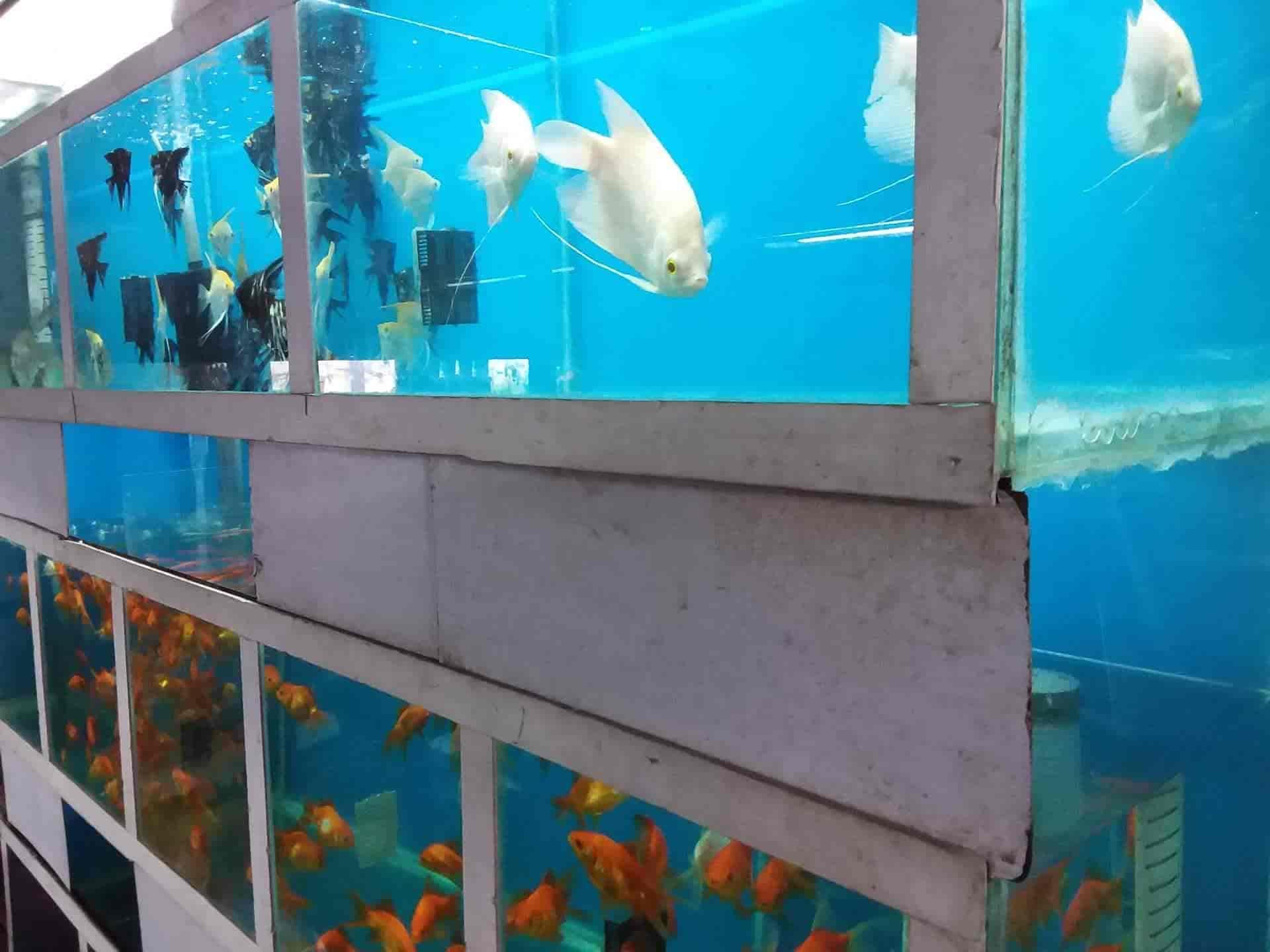 Top Fish Aquarium Dealers In Irinjalakuda Best Fish Aquarium Shops Justdial