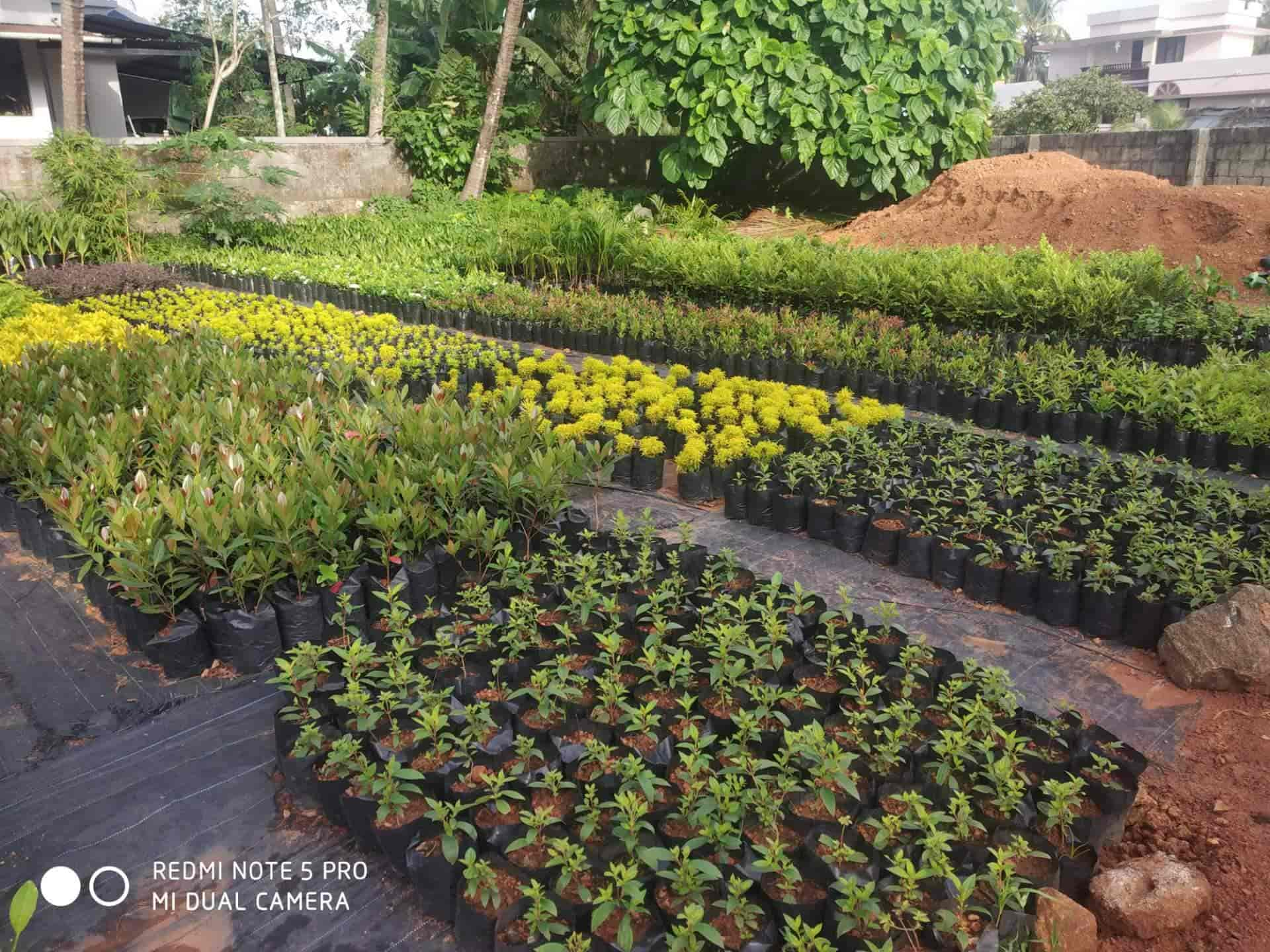 Top 100 Fruit Plant Nurseries In Kerala