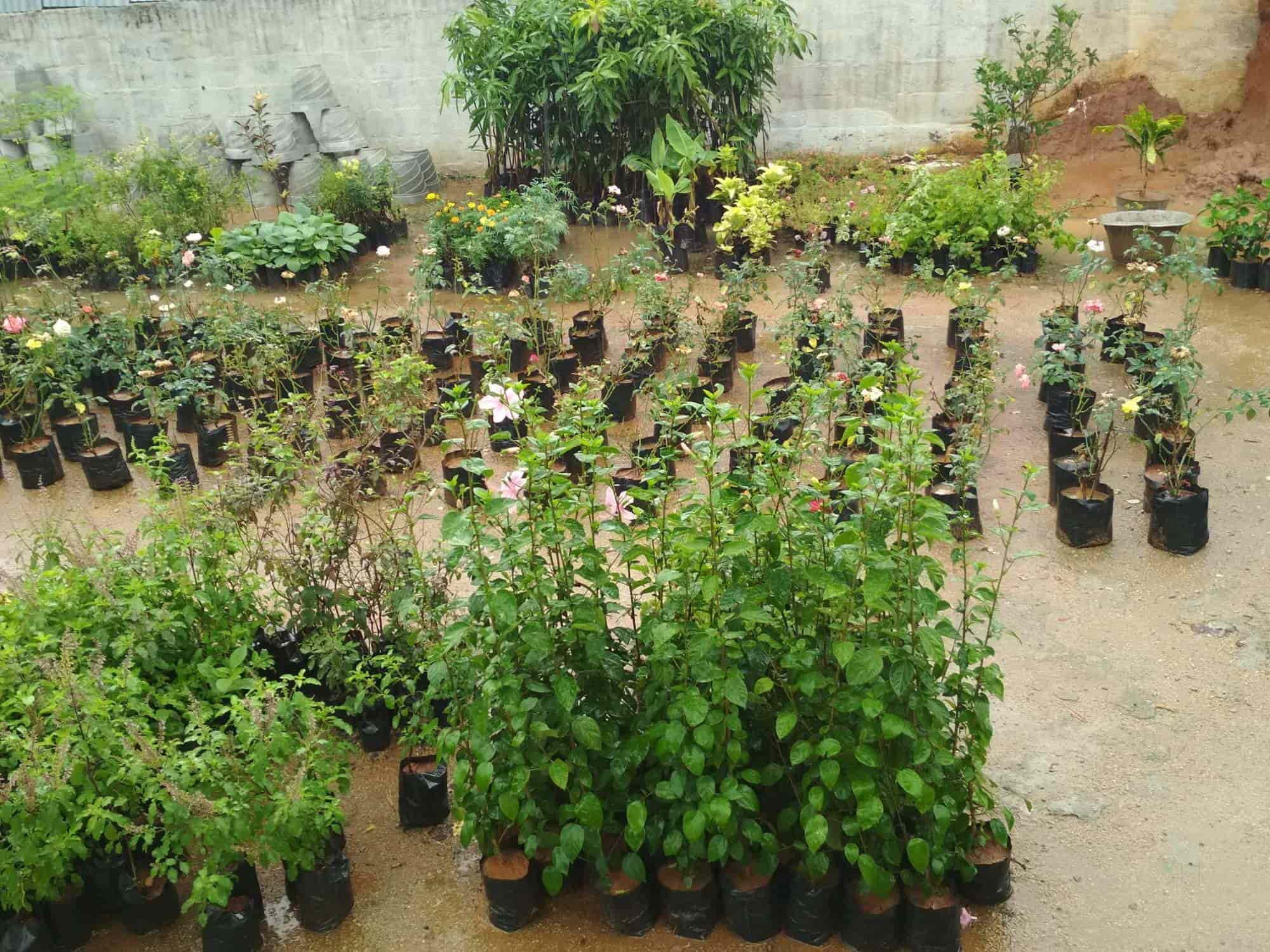 Ever Green Nursery And Gardens Plant Nurseries In Tirupati Justdial