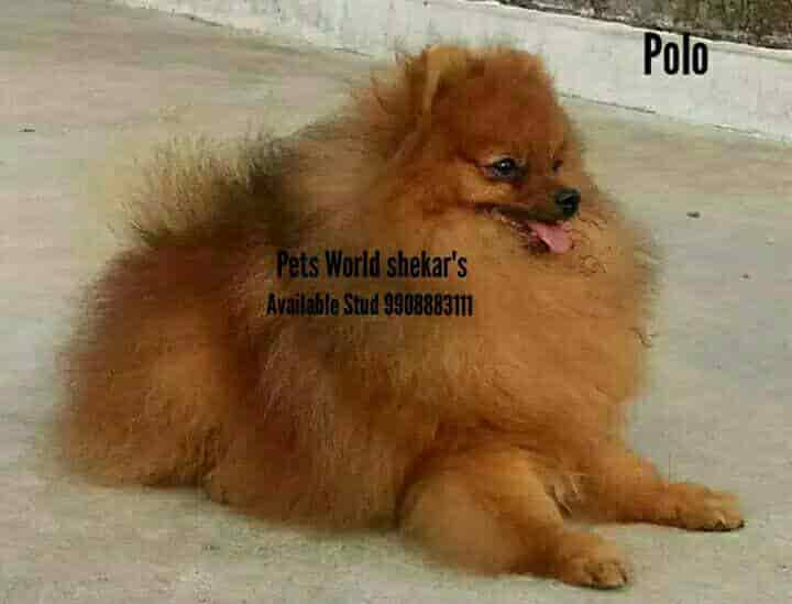 Top 30 Pet Shops For Pomeranian Dog In Visakhapatnam Best Pet