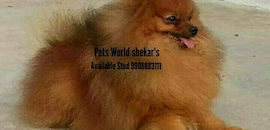 Top 50 Pet Shops For Dog in Visakhapatnam - Best Pet Store