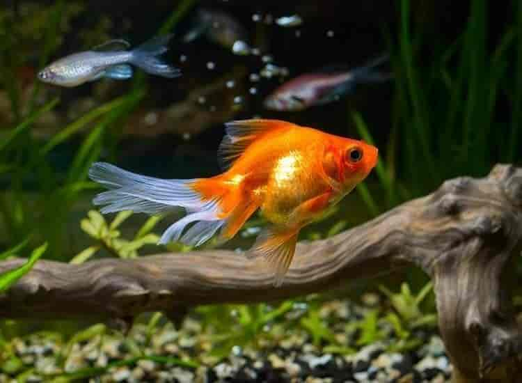 Top 30 Fish Aquarium Dealers In Kozhikode Best Fish Aquarium Shops