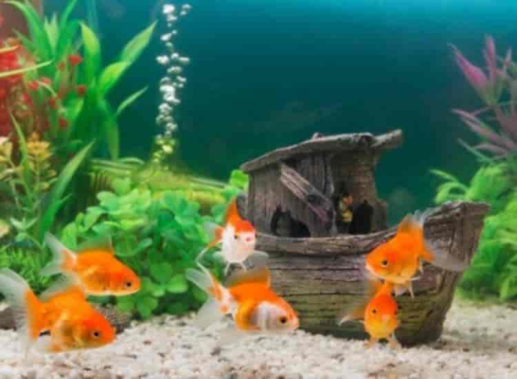 Rajasri Fish Medicals Aquarium Fish Dealers In Kaikalur Justdial