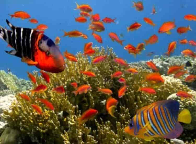 Top 100 Fish Aquarium Dealers In New Market Best Fish Aquarium