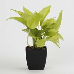 Blesiya Natural Look Orchid Grass Bonsai Topiary In//outdoor Foliage Plant Pot Red