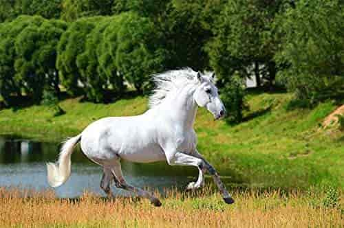 Buy A Beautiful Running White Horse 3d Wallpaper Available In All