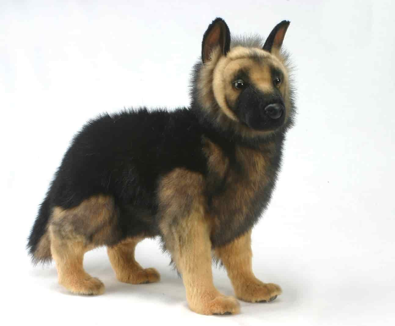 German Dog Breeds: Review and Specifications