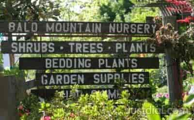 Bald Mountain Nursery Near Labota Rd Lobata Ca Browns Valley Best Nurseries Justdial Us