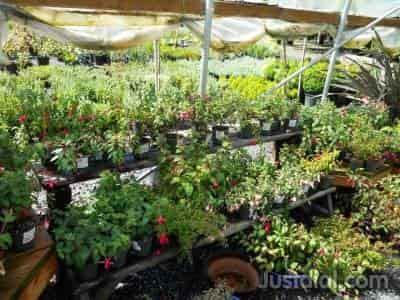 Bloomers Nursery Retail Near Armitage